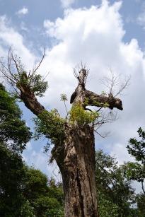 dried-tree-175768_1280